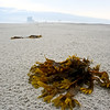 Seaweed in Atlantic City